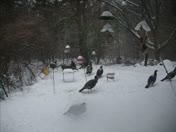 Feb 5th maorning visitors!