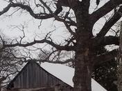 log cabin (GreatGrandmother)