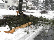 Ice Storm Carnage