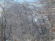 Crystalline Trees