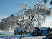 Ice Storm - 2014