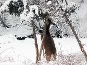 deer feeding2