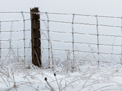 Ice Coated Fence/Cambridge On