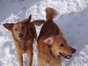 Haven & Nauset love the snow! (But not me)