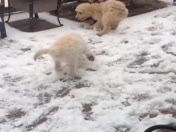 Puppies in the snow!