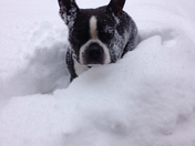 My dog in the snow.