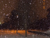 Feb. 12, 2014 Snow