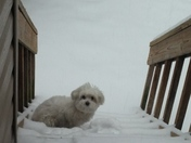 Lei Lei Snow
