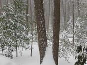 Snow Depth Bear Mountain Lodge