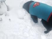 Superdog Palmer
