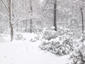 Winter Pic.