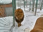 Winter Animal Photos at D.E.W. Animal Kingdom Mt Vernon Maine