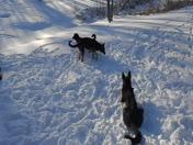 Chasing Snow Balls