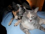 Ellie the Dog Peaches the Cat