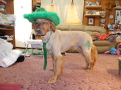 Getting Ready for St. Patrick's Day