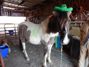 Tramps ready for St. Patricks Day