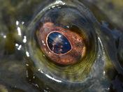 Eye Inukshuk