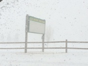 Whiteout conditions in Cook Forest, Pa