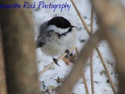 Birds by Sam Rock