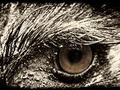 ostrich's eye