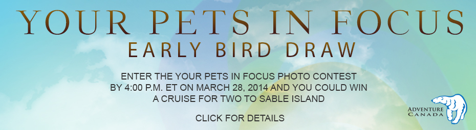 Your Pets in Focus Early Bird