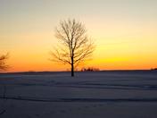 """Lonely Tree"""