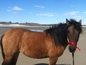 Spirit enjoys a day at the beach!