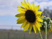 New Mexico beauty