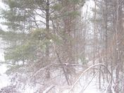 Winter Storm March 2014
