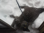 Jude in the Snow