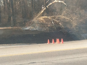Tree fell on power lines