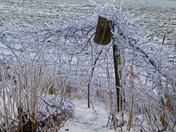 Ice Vine North