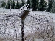 Ice Vine South