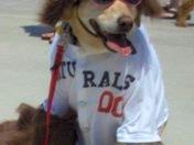 Pup Madness