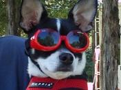 Jasper Ready for Summer
