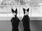 4c. A curious pair