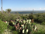 Prickly Pear Cactus and Yucca, Carlsbad Caverns, NM