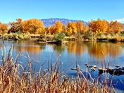 Albuquerque Bosque in the Fall by Vanessa Ortiz