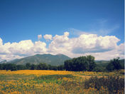 Yellow field and mountains