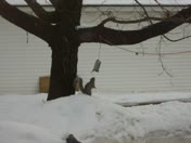 Squirrel chase