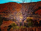 I Love New Mexico Photo Contest
