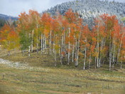 Chama NM cold with orange trees and snow