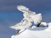 Air Snowy