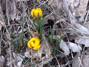 There's hope for spring!