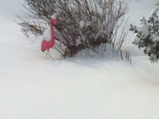 freezing' flamingo