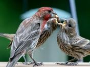 FeedingTime
