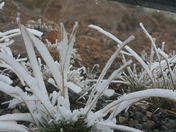 Frosty morning on the Beartooth Plateau