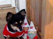 Mitzy and Badger trolls ready for Bucky win!