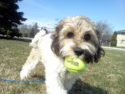 My dog Henry