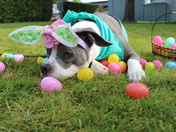 Happy Easter from Penny Lane!